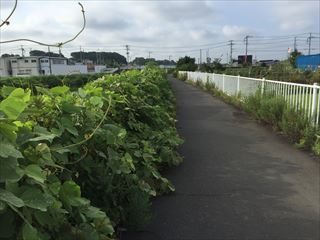 201508miura010_R.JPG
